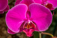 2014 orchid show